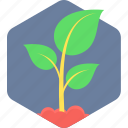 plant, green, ecology, leaf, nature