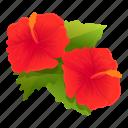 bloom, hibiscus, flower, plant