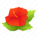 blossom, hibiscus, floral, plant