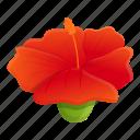 exotic, hibiscus, plant, blossom