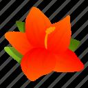 hawaii, hibiscus, flower, summer