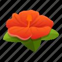 beach, hibiscus, floral, leaf