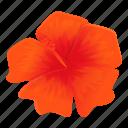 hibiscus, flower, beautiful, beauty