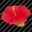 carmine, hibiscus, plant, floral