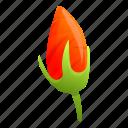 hibiscus, flower, nature, plant