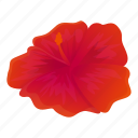 red, hibiscus, flower, blossom