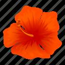 tropical, hibiscus, exotic, flower
