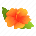 plant, hibiscus, hawaii