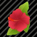 plant, hibiscus, beauty