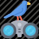 activities, bird, birds, hobbies, pastime, watching