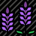 flower, graden, hokkaido, lavender icon