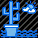 cactus, desert, ecology, plant, water
