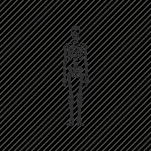 Halloween Skeleton.Halloween Glyph By Vectto