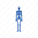 bones, halloween, human skeleton, skeleton icon