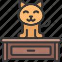 cat, on, desk, animal, pet, kitten