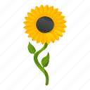 agriculture, beautiful, beauty, flower, garden, sunflower
