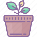 green, home, house, interior, plant, pot icon