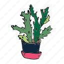 cacti, cactus, hobby, house, nature, plant, succulent icon
