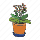 bloom, calanchoe, grow, hobby, house, plant, succulent icon