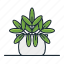 star, fern, plant, houseplant, decorative, garden, nature