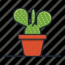 bunny, cactus, plant, houseplant, decorative, garden, nature