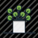 chinese, money, plant, houseplant, decorative, garden, nature