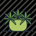 happy, bean, plant, houseplant, garden, nature, decorative