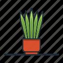 snake, plant, houseplant, garden, nature, decorative