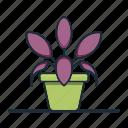 velvet, calathea, plant, houseplant, garden, nature, decorative
