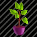 decoration, floral, flower, house, houseplant, tree