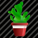 cactus, floral, flower, houseplant, tree, tribal