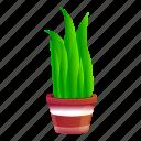 child, floral, flower, flowerpot, succulent, tree