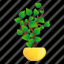 floral, flower, hand, leaf, pot, tree