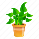 botany, floral, flower, house, houseplant, tree