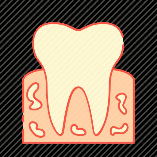 bone, dental, histology, medical, medicine, oral, tooth icon