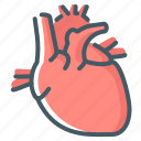 anatomy, cardiology, heart, organ