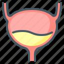 bladder, gastroenterology, organ