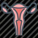female, uterus, vagina, womb