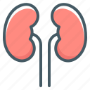kidneys, organ