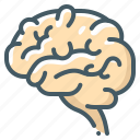 brain, mind, organ