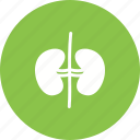 anatomy, body, healthy, human, kidney, renal, urine icon