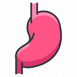 anatomy, body, human, organ, stomach icon