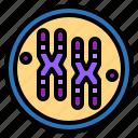 biology, chromosome, dna, genetic