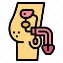 anatomy, penis, reproductive, system, urology icon