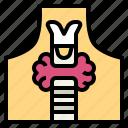 gland, larynx, organ, thyroid icon