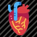 heart, human, medical, organ