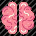 brain, human, medical, people icon