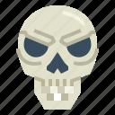 anatomy, bone, human, skull