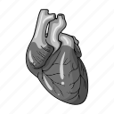 anatomy, health, heart, human, medicine, organ icon