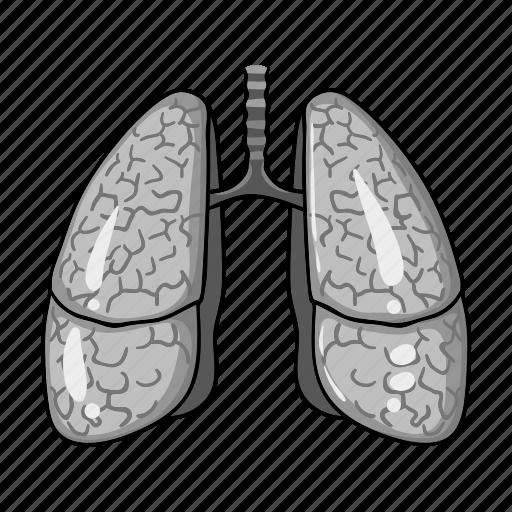 Anatomy, health, human, lung, medicine, organ icon - Download on Iconfinder